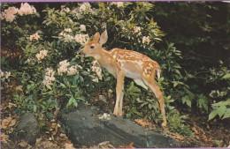 Animaux °° Un Tout Jeune Bambi - 9x14 – écrite - Dieren