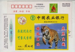South China Tiger Spirit,China 1998 Agricultural Bank Ezhou Branch Advertising Pre-stamped Card - Big Cats (cats Of Prey)