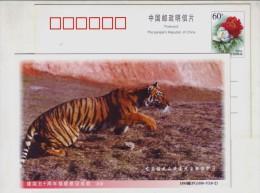 CN 99 Longyan Mt.Meihuashan Nature Reserve Adv PSC Endangered Species South China Tiger Breeding Wild-Naturalizing Park - Félins