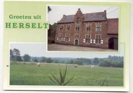 HERSELT-GROETEN UIT-MEERZICHT-KAAIBEEKHOEF-KOEIEN - Herselt