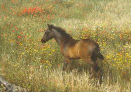HORSES / PFERDE / CHEVAUX /  POSTCARD UNUSED    ( H  2957  / - Pferde