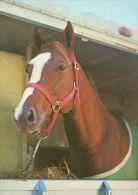 HORSES / PFERDE / CHEVAUX /  POSTCARD UNUSED    ( H  2969  / - Pferde