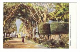 CUBA  /  HAVANA  /  GARDENS  AND  AVENUE  OF  ROYAL  PALMS  /   Edit. RAPHAEL TUCK & Sons  /  OILETTE , Serie N° 7729 - Cuba