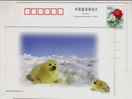 China 1999 New Year Greeting Postal Stationery Card Lovely Greenland Baby Seal - Other