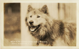 North Woodstock Real Photo Big Blue Ed. Clark's Eskimo Sled Dog Ranch Chien Traineau - Etats-Unis