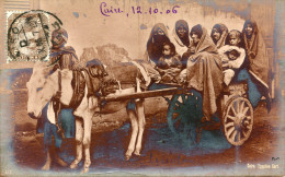 ANE(EGYPTE) LE CAIRE(TYPE) - Burros