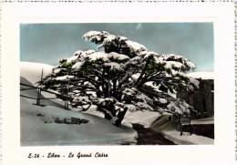 Très Belle Carte - LIBAN - Le Grand Cèdre Sous La Neige - Liban