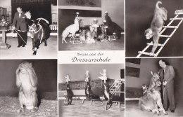 Ax - Cpa Gruss Aus Der Dressurschule - Carl Hagenbeck's Tierpark, Hamburg - Stellingen (dressage D'animaux) - Stellingen