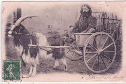 Barneville S/ Mer - ATTELAGE Avec Une Chèvre - GROS PLAN  -sans éditeur - Barneville