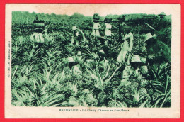 972 MARTINIQUE - Un Champ D'Ananas Au Gros-Morne - Martinique