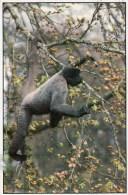 Postcard - Woolly Monkey (Polly) At The Monkey Sanctuary. A - Monkeys