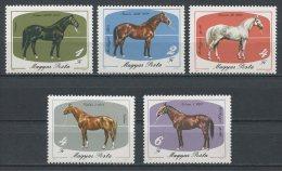 HONGRIE 1985 N° 2988/2992 ** Neufs = MNH  Superbes Cote 5.50 € Elevage De Mezohegyes Faune Chevaux Horses Animaux - Nuovi