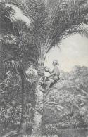 Inde - Native Drawing Toddy - Palm Tree - Carte Non Circulée - Asie