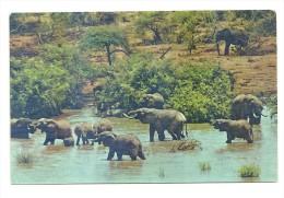 Eléphants : African Wild Life - Éléphants