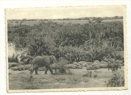 Eléphants : Et Hippopotames. Bugugu. Plaine Du Lac Edouard. - Éléphants