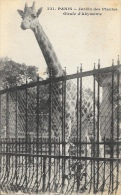 Paris - Jardin Des Plantes - Girafe D'Abyssinie - Edition L. Moreau - Carte Non Circulée - Girafes