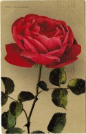 No. 1958 - Papa Gontier, Pinkish Rose From 1910 - Flowers