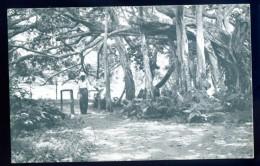 Cpa Antilles Trinidad B.W.I. Port Of Spain  -- Banyan Or Ceylon Willow In The Botanical Gardens  DEC15 07 - Trinidad