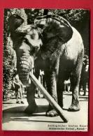 PAC-27  Eléfant D'Afrique Matadi Du Jardin Zoologique Bâle, Afrikanischer Elefant, Zoologischer Garten Basel.Circ. 1952 - Éléphants