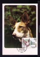 PODENCO IBICENCO Spanish Breed Dogs Espagnol Chiens De Race Animals Faune Carte Maximum Cards Mc481 - Spain