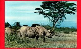 TANZANIA - Cartolina Viaggiata Nel 1968 - Animali - Rinoceronte - African Wild Life Rhino - Tanzania