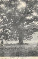 St-Point - Chêne Jocelyn - Edition B.F. - Arbres