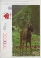 Qinghai-Tibet Plateau First-grade State Protection Species White-lipped Deer,CN 09 Xiangtan New Year Pre-stamped Card - W.W.F.