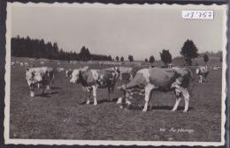 Epiquerez (datée De –, En 1942) : Vaches Et Veau Tout Neuf (paturage Du Jura) (13´757) - JU Jura