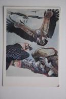 Bearded  Vulture - OLD USSR PC 1990 - Oiseaux