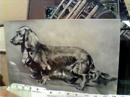 CANE DOG BASSOTTO TEDESCO PELO LUNGO CAMPIONE BIBY DEL DUOMO  N1965 FD7565 - Hunde