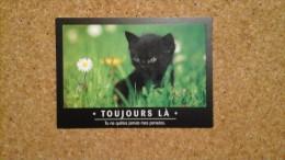 Carte Postale CHAT CHATON   TOUJOURS LA    Non Circulé - Chats