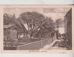 1910  Helgoland Baumblute   2 Scan - Helgoland