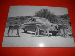 B622 Leoni Sud Africa Viaggiata - Leoni