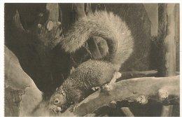 L30C.14 - Jardin Des Plantes  - Ecureuil Versicolore - Animals