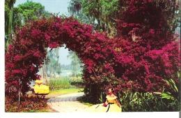 Arbor Of Purple Bougainvillea At Cypress Gardens, Florida - Fleurs