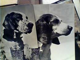9 CARD CANE DOG CACCIA POINTER SETTER VARIE RAZZE    FD7607 - Hunde