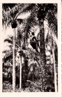 CP Photo Récolte Des Palmistes    Collection G. LABITTE - Dahomey