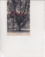 Environs De Bernay - L'arbre De Robinson, Ref 1512-686 - Bernay