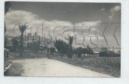 Altea (Espagne, Comunidad Valanciana) :  Visión General Tomada De La Carretera De Acceso A La Ciudad 1954  PF. - Autres