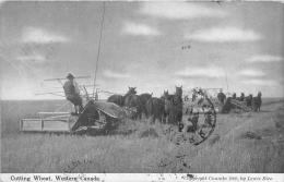 CUTTING WHEAT WESTERN CANADA  MATERIEL AGRICOLE CANADA - Agriculture