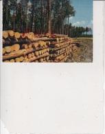 Forêt Des Landes - Les Billots, Ref 1512-823 - France