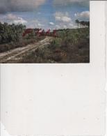 Visage Des Landes - Sentier En Forêt, Ref 1512-844 - Non Classés