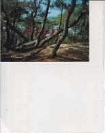 Les Landes - Pins Du Littoral Atlantique, Ref 1512-849 - France