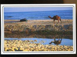 CPM Sultanat D´OMAN God´s Gift To The Désert Le Don De Dieu Pour Le Désert Dromadaire Chameau - Oman
