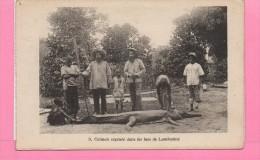 CAIMAN CAPTURE DANS LES LACS DE LAMBARENE - Gabon