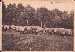 Arendonk Arendonck Kempische Herder ( Schaap Schapen Schaapsherder ) Reclame Op Keerzijde: Hotel De Kempen - Arendonk