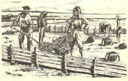94206 -  Illustrateur G.Jeanjean  Bassin D'Arcachon (33) Reproduction  Série M 13   N° 269    Parqueurs  (ses) D'Huitres - Otros Ilustradores