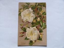 FLEURS   ILLUSTRATEUR  MILLOT  :  ROSE ALBERIC BARBIER - Fleurs
