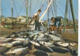 Débarquement Des Thons Sur La Côte Atlantique - Couleurs Et Lumières De France N°5043 Yvon - Fishing