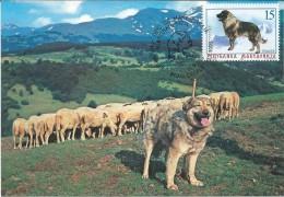 Macedonia.Dogs. Sharplaninec Or Illyrian Sheepdog.Maximum Card.RARE - Macedonia